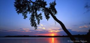 Sakatah Lake, Minnesota, dawn, leaning tree