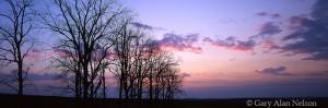 trees, minnesota