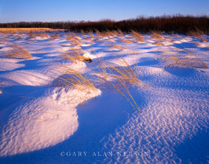 Textured snow and Prairie Grasses