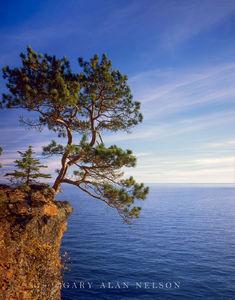 minnesota, lake superior, red pine