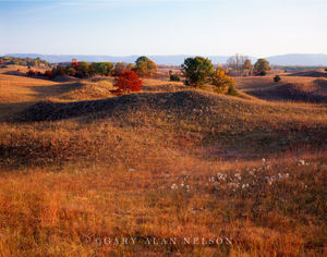 sand hills, prairie, scientific and natural area, mississippi river