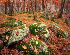 oak, st. croix river, boulders