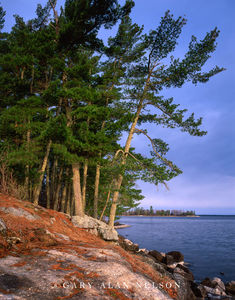 voyageurs national park, minnesota, kabetogama lake, white pine