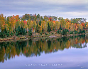 Autumn in the Chippewa Forest