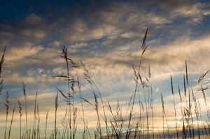 indian grass, minnesota, prairie, dusk
