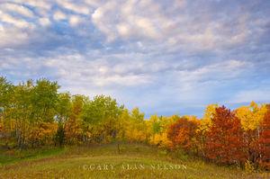 autumn, minnesota, prairie, state park