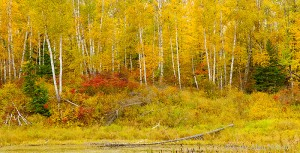 minnesota, national forest, chippewa national forest, autumn