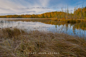 minnesota, national forest, chippewa national forest, lake