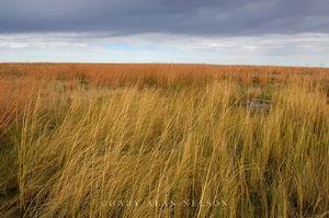 grass, prairie