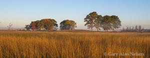 grasses, trees, carlos avery, wildlife area, minnesota