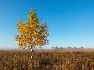 prairie, birch, minnesota, carlos avery, wildlife area