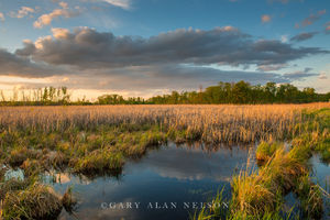 Clouds over Cattail Marsh