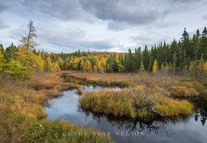 Forest,autumn,minnesota,state park