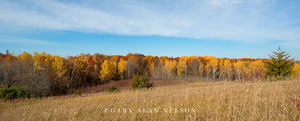 Prairie and woods in autumn