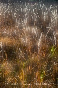 Indian grass on the prairie