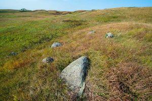 Glacial erratics on a moraine