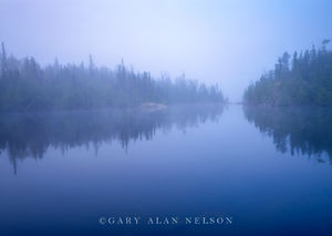 boundary waters, canoe, minnesota, lake, fog, pines, wilderness