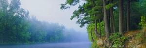 minnesota, white pines, st. croix national scenic river, fog