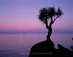 Spirit Little Tree, Full Moon, Lake Superior, Minnesota