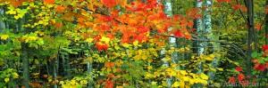 minnesota, hardwood forest, state park, autumn