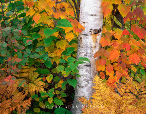superior national forest, minnesota, autumn, colors