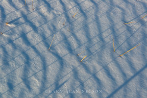Shadowed Lines