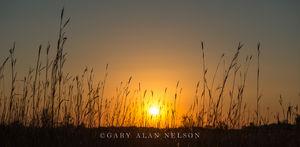 Big Bluestem at Sundown