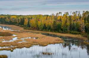 Autumn Marsh in Superior Ntl. Forest