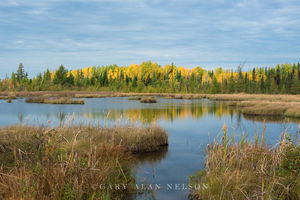 Marsh in Superior National Forest