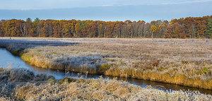 WMA,autumn,minnesota,wildlife management area