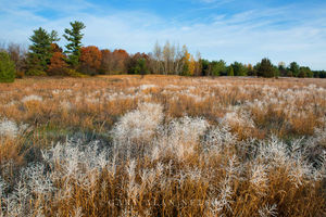 WMA,autumn,minnesota,wildlife management area