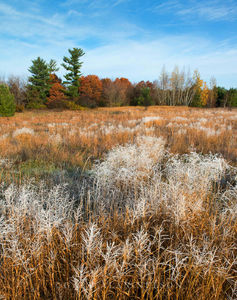 Hoar Frost and Prairie Grasses