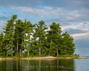 White Pines and Sky on Kabetogema