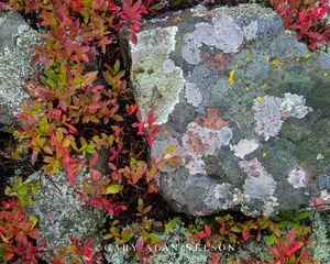 lake superior, rock, blueberry, rocks, minnesota