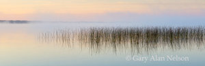 bulrushes, minnesota,, lake
