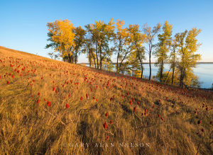 sumac, minnesota, prairie, lake Christina, the nature conservancy