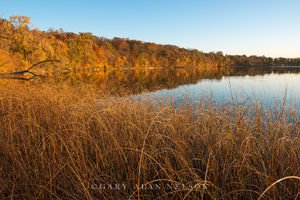 bulrushes, minnesota, round lake, autumn