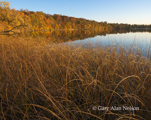 bulrushes, round lake, minnesota, lake