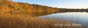round lake, minnesota, bulrushes, autumn
