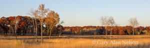 oak, birch,minnesota, prairie, cedar creek