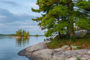 minnesota, voyageurs national park, island, white pines
