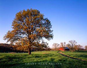 Oregon County, Missouri, barn
