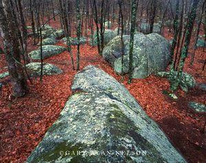 Elephant Rocks State Park, Missouri, woods, boulders