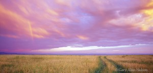 Pink Skies and Path