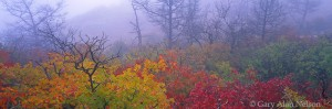 asters, oak leaves, wichita mountains