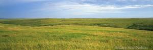south dakota, rolling hills, ft. pierre national grassland