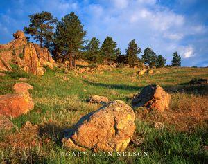 Wind Cave National Park, South Dakota, boulders, pines
