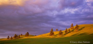 Custer State Park, Black Hills, South Dakota, rolling prairie, morning light