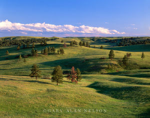 Custer State Park, Black Hills, South Dakota, rolling hills, pines