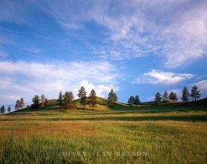 Custer State Park, Black Hills, South Dakota, hills, pines